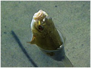 Трудовые рыбалки