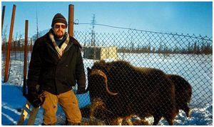 15 лет овцебыку  на Ямале