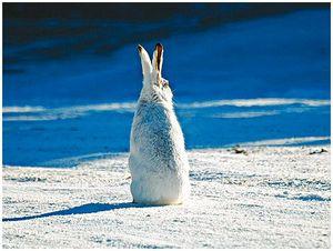Интересное  о зайцах