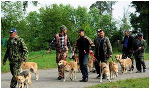 Ивановская областная выставка охотничьих собак