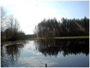 На лесных озерах