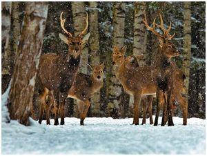 Народные охотобщества: реальность или миф?