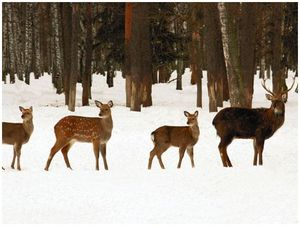 Охотничьи животные в частном владении    (часть вторая)