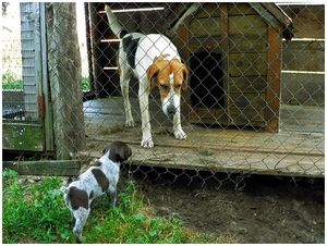 От щенка  до взрослой  собаки