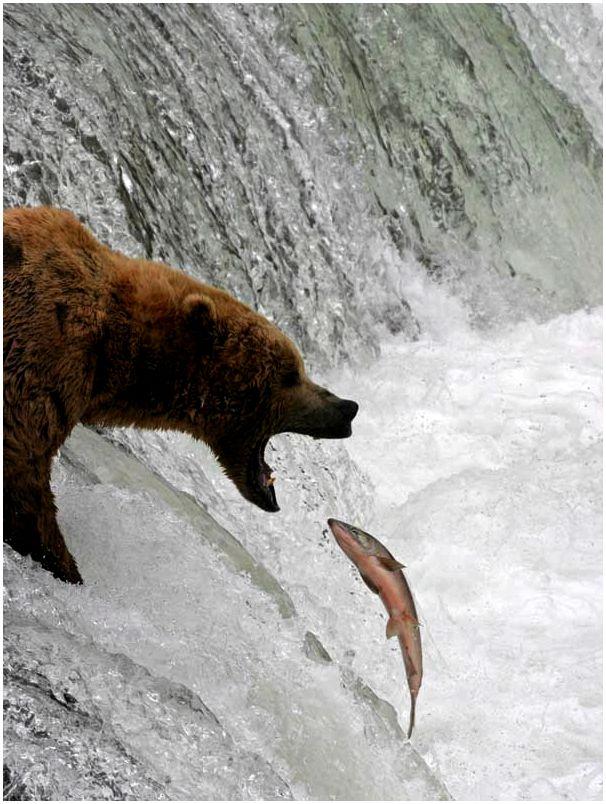 выживание в дикой природе встреча с медведем будет