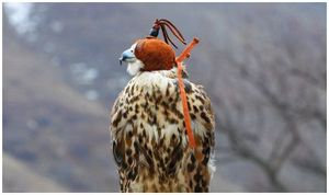 Высокого сокола лёт
