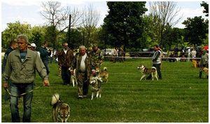 Выставки  охотничьих собак  и проблемы  вне стандарта