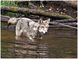 Астрахань: борьба с волками