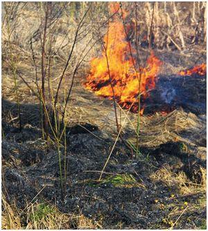 Что опасно для русского леса?