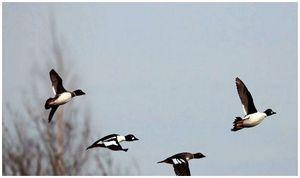 Кому нужны ограничения по максимальным  площадям охотничьих угодий