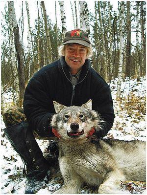 Маленький волк,  свежая пороша и Наташа Ростова