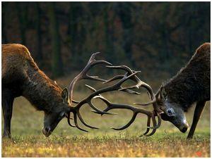 Оружие и охота