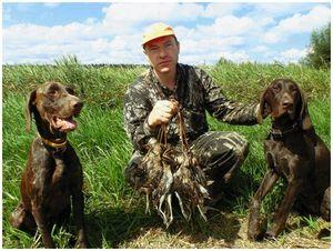 Отчеты об охотах с легавыми  в прошлом году наших читателей