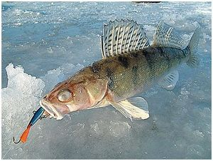 Полдня рыбалки