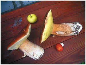 Последние  грибы