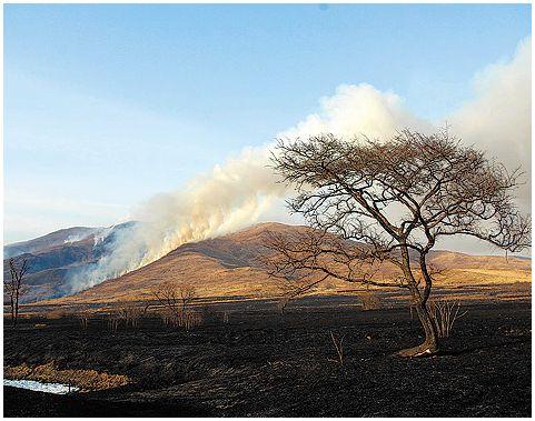 Пожары в заповеднике