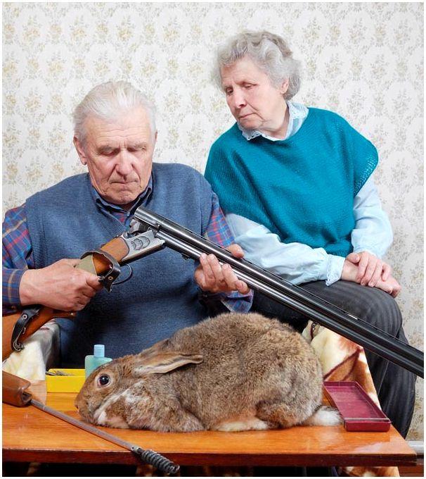 Правомерность применения огнестрельного оружия