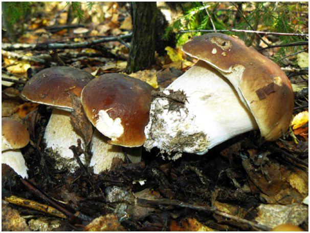 Утки с грибами