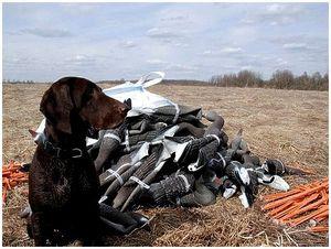 Запрет весенней охоты - начало положено
