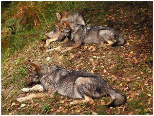 И волки, и вальдшнепы…