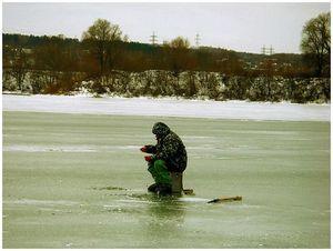 Ёлки в озере