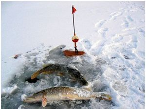 Ловля на зимние жерлицы