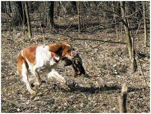 Охота с Фрейей