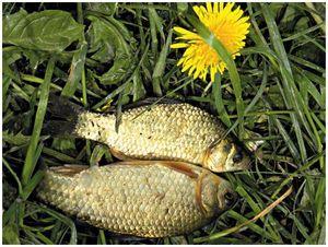 Особенности ловли разной рыбы  после нереста
