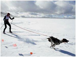 Подготовка  подружейной собаки в межсезонье