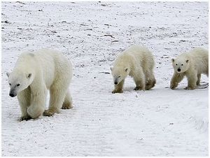 Арктика нам нужна