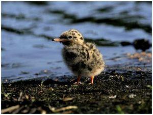 Большая трагедия маленьких птичек