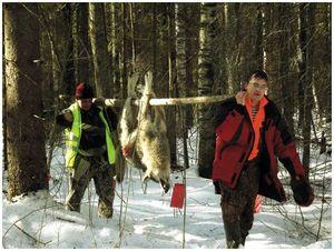 Добыча волков  в Вологодской области