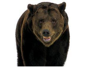 Из опыта медвежатника