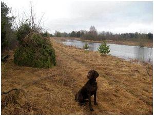О способах и правилах полевых испытаний легавых собак