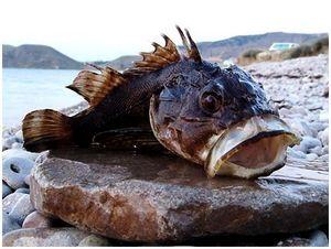 Опасные  обитатели моря