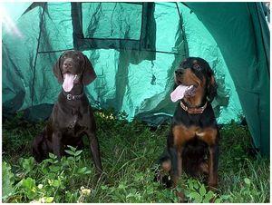 Питание и здоровье собак