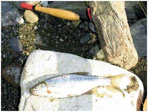 Рыбалка от Туапсе до Абхазии