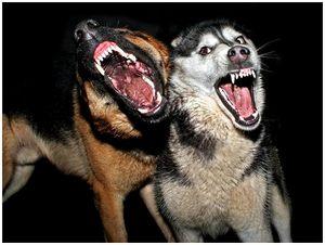 Собак бояться – в лес не ходить