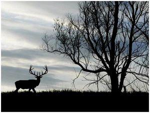 Частное охотпользование – путь к биоразнообразию?