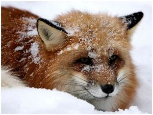 Февральские заботы и охоты