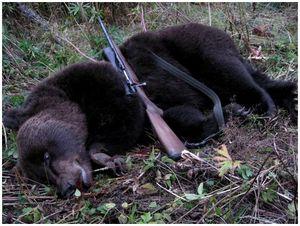 И мертвый медведь может  рявкнуть