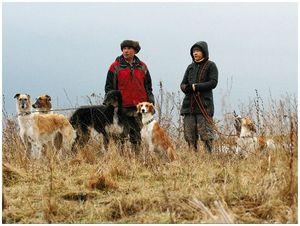 Идеальная охотничья собака – какая она?