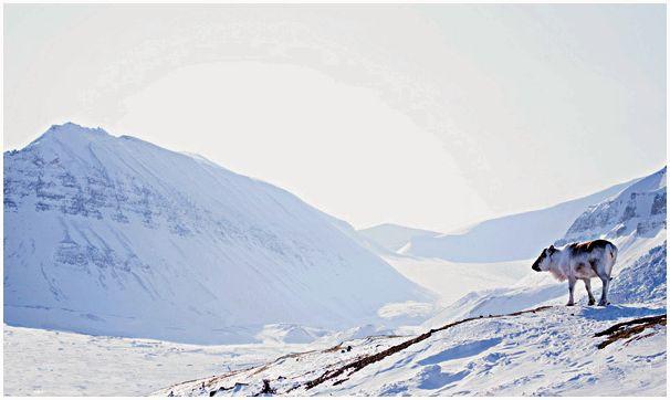 Ледяная сказка Свальбарда