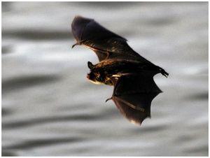 Летят мыши
