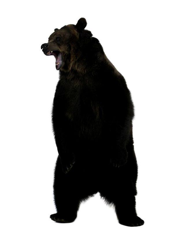 Медведь - зверь серьезный