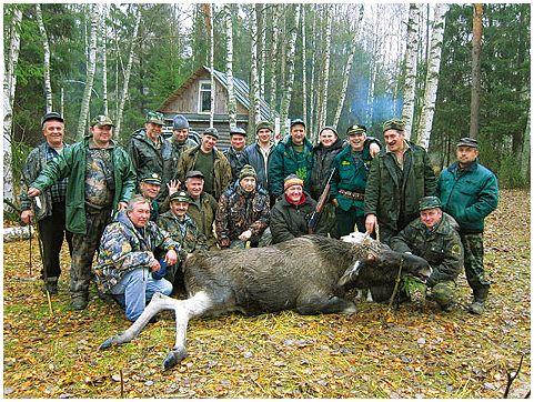 Облавные охоты на лося и кабана
