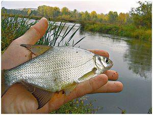 Один день на реке Белой