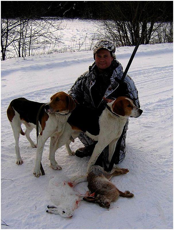 Охота со щенком гончей