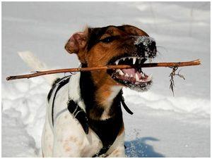Охотничье собаководство во время войны