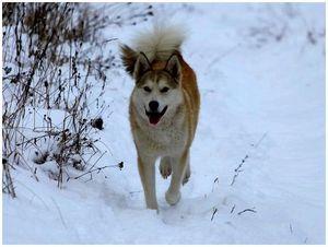 Охотничья собака: безнадзорное достояние народа